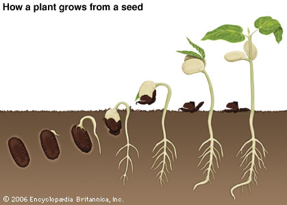 Understanding seeds in the bible except a seed fall into for Soil 7 days to die