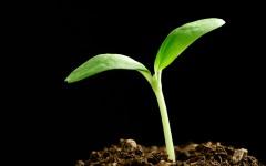 tender_plant3