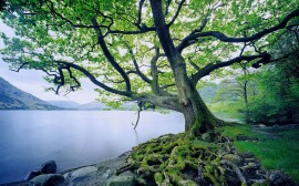 tree-and-river